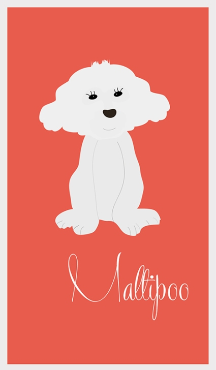maltipoo_drawing