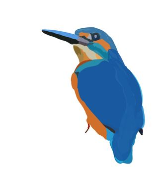kingfisher_bird